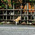 写真: 猫撮り散歩2089