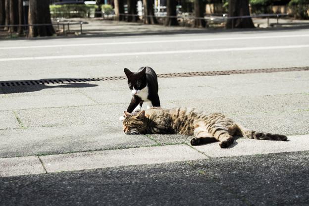 写真: 猫撮り散歩2090