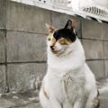 写真: 猫撮り散歩2091