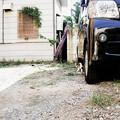 写真: 猫撮り散歩2093