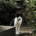 写真: 猫撮り散歩2095