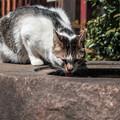 写真: 猫撮り散歩2096