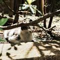 写真: 猫撮り散歩2098