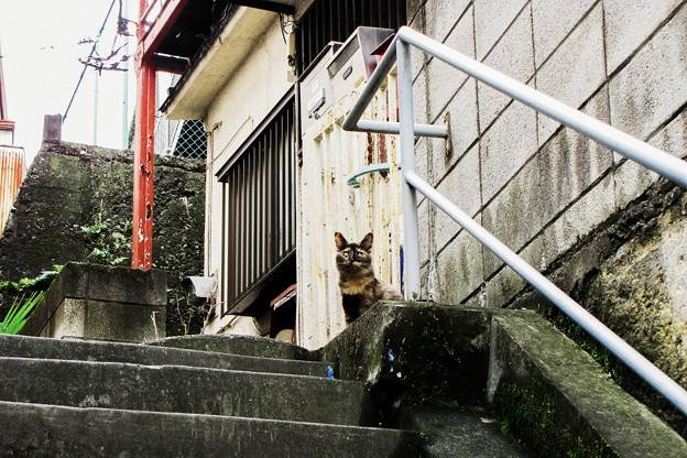 猫撮り散歩2099