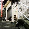 写真: 猫撮り散歩2099