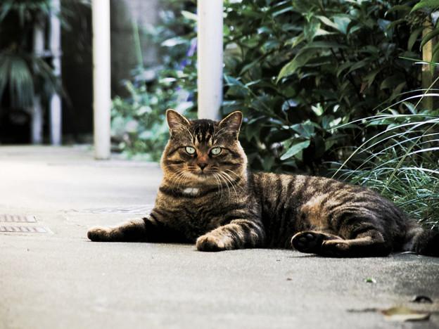 猫撮り散歩2103