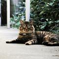 写真: 猫撮り散歩2103