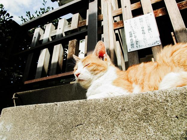 写真: 猫撮り散歩2104