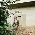 写真: 猫撮り散歩2108