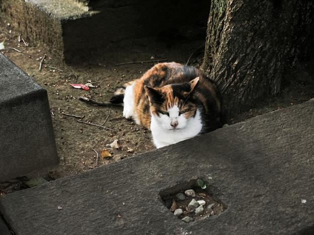 猫撮り散歩2110