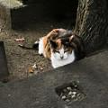 写真: 猫撮り散歩2110