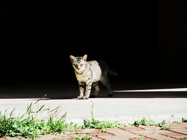 猫撮り散歩2113