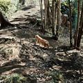猫撮り散歩2117