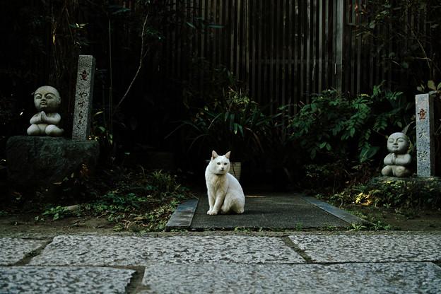 猫撮り散歩2120