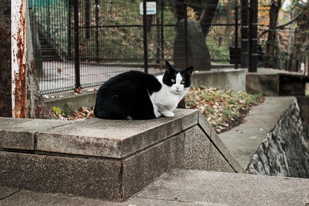 猫撮り散歩2125