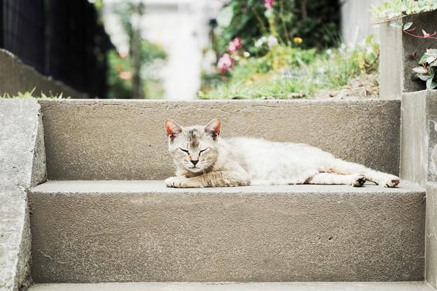 猫撮り散歩2128