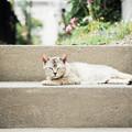 写真: 猫撮り散歩2128