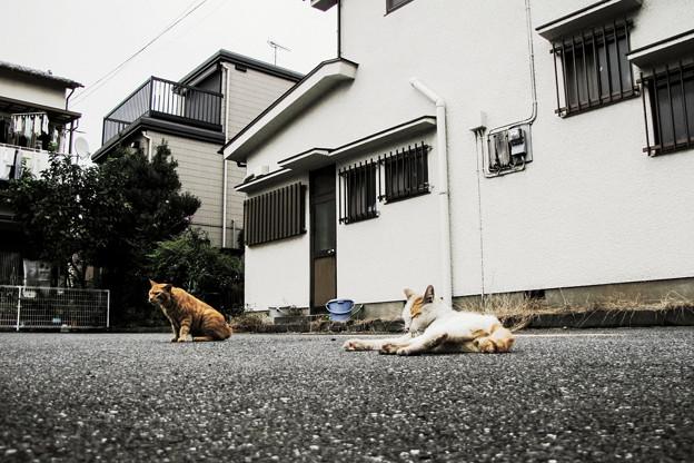 猫撮り散歩2130