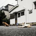 写真: 猫撮り散歩2130