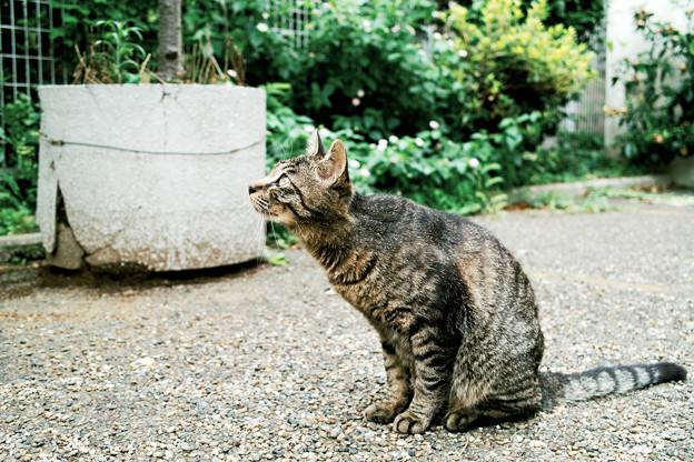 写真: 猫撮り散歩2132