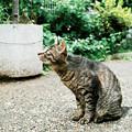 猫撮り散歩2132