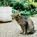 Photos: 猫撮り散歩2132