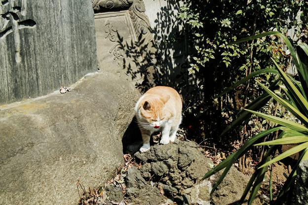 写真: 猫撮り散歩2134