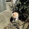 Photos: 猫撮り散歩2134
