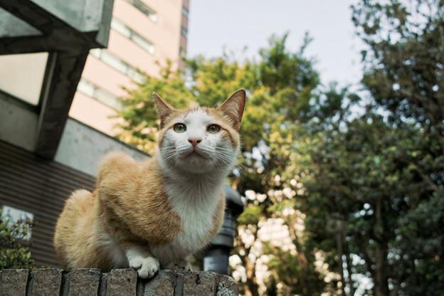 Photos: 猫撮り散歩2135