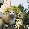 写真: 猫撮り散歩2135