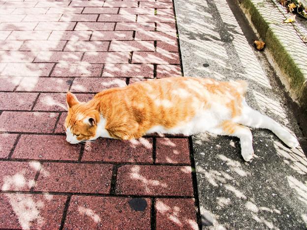 猫撮り散歩2149