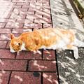 写真: 猫撮り散歩2149