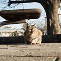 写真: 猫撮り散歩2150