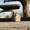 Photos: 猫撮り散歩2150