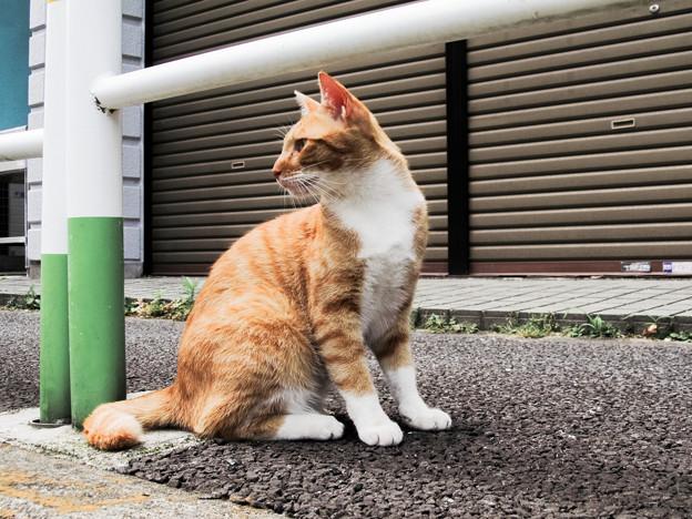 猫撮り散歩2152