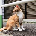 写真: 猫撮り散歩2152