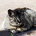 写真: 猫撮り散歩2155
