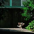 写真: 猫撮り散歩2157
