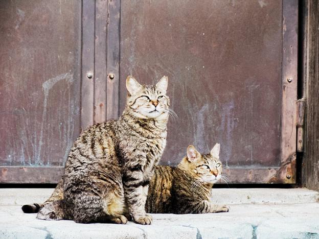 猫撮り散歩2158
