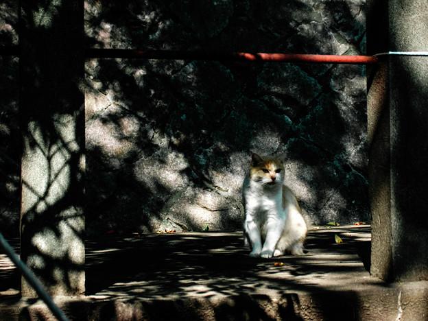 猫撮り散歩2161