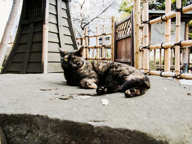 猫撮り散歩2163