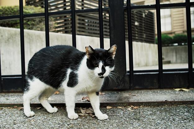猫撮り散歩2165
