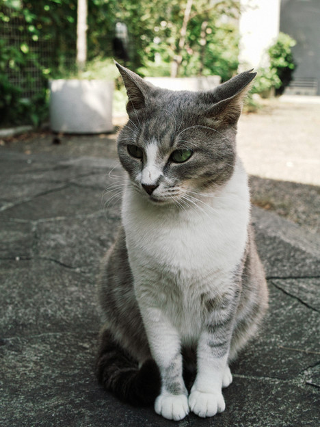 猫撮り散歩2168