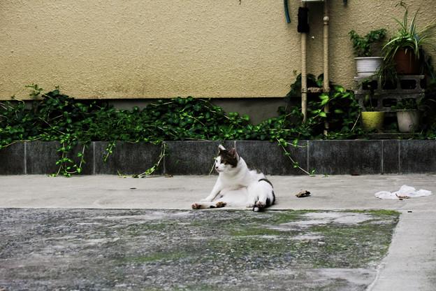 猫撮り散歩2169
