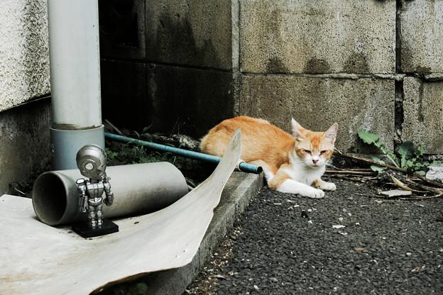 猫撮り散歩2172