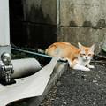 写真: 猫撮り散歩2172
