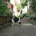 猫撮り散歩2174