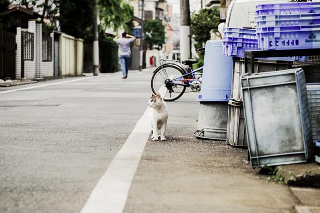 猫撮り散歩2176