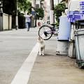 写真: 猫撮り散歩2176