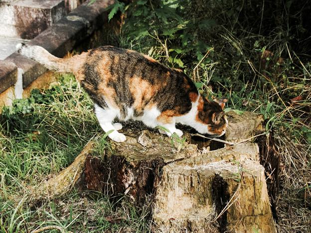 猫撮り散歩2178